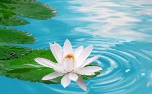 b-ku lotus white