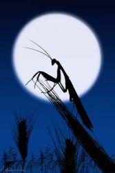 moon bug